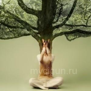 Большое дерево цигун - видео упражнение