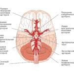 Упражнения цигун для сосудов головного мозга и нервной системы